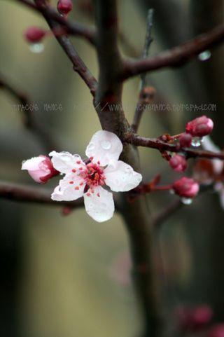 ODM_flower