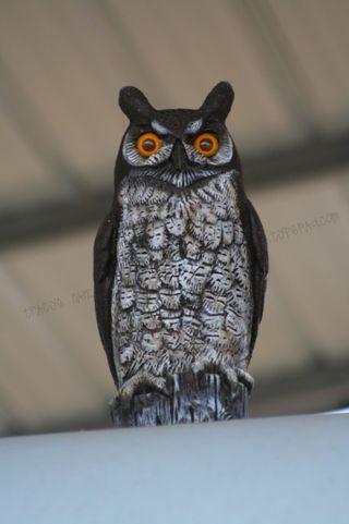 ODM_owl